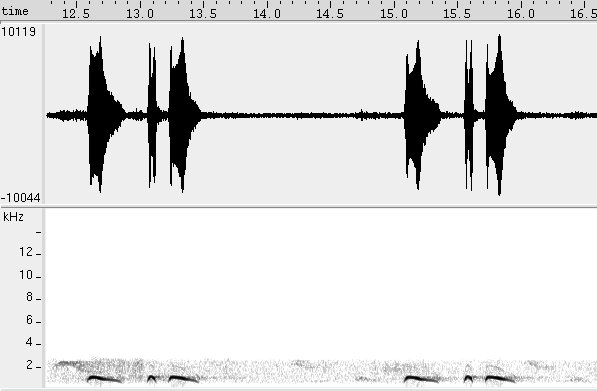 Spectrogram: Song of Scaled Dove (Columbina squammata)